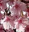 Flower_20200320222301